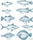 рыбы, морская рыба, речная рыба, окунь, карп, щука, тунец, форель, треска, судак, камбала, морепродукты, еда, морская фауна, fish, sea fish, river fish, carp, tuna, perch, pike, flounder, cod, trout, pike perch, sea products, food, marine fauna, fisch, seefisch, flussfisch, karpfen, thunfisch, barsch, hecht, flunder, kabeljau, forelle, hechtbarsch, meeresprodukte, lebensmittel, meeresfauna, poisson, poisson de mer, poisson de rivière, carpe, thon, perche, brochet, plie, morue, truite, sandre, produits de la mer, nourriture, faune marine, pescado, pescado de mar, pescado de río, atún, perca, lucio, lenguado, bacalao, trucha, lucioperca, productos del mar, pesce, pesce di mare, pesce di fiume, tonno, luccio, passera, merluzzo bianco, trota, pesce persico, prodotti del mare, cibo, fauna marina, peixe, peixe do mar, peixe do rio, carpa, atum, solha, bacalhau, truta, poleiro, produtos do mar, alimentos, fauna marinha, риби, морська риба, річкова риба, короп, тунець, тріска, морепродукти, їжа, морська фауна