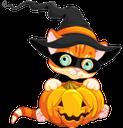 хэллоуин, тыква, рыжий кот в шляпе, pumpkin, ginger cat in the hat, kürbis, ingwer katze im hut, citrouille, gingembre chat dans le chapeau, calabaza, gato del jengibre en el sombrero, halloween, zucca, zenzero gatto nel cappello, o dia das bruxas, abóbora, gato do gengibre no chapéu