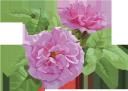голубая роза, цветок розы, бутон розы, цветы, флора, роза, зеленое растение, blue rose, rose flower, flowers, green plant, blaue rose, rosenblüte, rosenknospe, blumen, grüne pflanze, rose bleue, fleur rose, bouton de rose, fleurs, flore, rose, plante verte, capullo de rosa, rosa blu, fiore rosa, bocciolo di rosa, fiori, pianta verde, rosa azul, rosa flor, rosebud, flores, flora, rosa, planta verde, блакитна троянда, квітка троянди, бутон троянди, квіти, троянда, зелена рослина