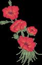 цветы, красные цветы, флористика, флора, flowers, red flowers, floristics, blumen, rote blumen, floristik, fleurs, fleurs rouges, floristique, flore, flores rojas, fiori, fiori rossi, floristica, flores, flores vermelhas, florística, flora, квіти, червоні квіти