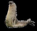 тюлень, морж, seal, walrus, robben, walrosse, phoque, le morse, sello, sigillo, trichechi, selo, morsa