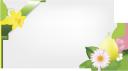 поздравительная открытка, цветок, лента, greeting card, flower, ribbon, grußkarte, blume, band, carte de voeux, fleur, ruban, tarjeta de felicitación, cinta, biglietto di auguri, fiori, nastro, cartão, flor, fita, вітальна листівка, квітка, стрічка, цветы