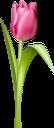 тюльпан, цветы, красный тюльпан, красные цветы, флора, весна, tulip, flowers, red tulip, red flowers, spring, tulpe, blumen, rote tulpe, rote blumen, frühling, tulipe, fleurs, tulipe rouge, fleurs rouges, flore, printemps, tulipán, tulipán rojo, flores rojas, tulipano, fiori, tulipano rosso, fiori rossi, tulipa, flores, tulipa vermelha, flores vermelhas, flora, primavera, квіти, червоний тюльпан, червоні квіти
