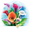 калла, цветок каллы, цветы, флора, flower calla, flowers, blume calla, blumen, fleur calla, fleurs, flore, fiore calla, fiori, calla, flor calla, flores, flora, кала, квітка кали, квіти