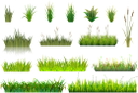 трава, болотная трава, камыш, осока, зеленая трава, зеленое растение, зеленый, grass, marsh grass, reed, sedge, green grass, green plant, green, gras, sumpfgras, schilf, segge, grünes gras, grüne pflanze, grün, herbe, herbe des marais, roseau, carex, herbe verte, plante verte, vert, hierba, hierba del pantano, caña, juncia, hierba verde, erba, erba di palude, canna, carice, erba verde, pianta verde, pântano, capim, junco, capim verde, planta verde, verde, болотна трава, очерет, зелена трава, зелена рослина, зелений