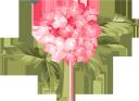 сирень, цветы, розовая сирень, флора, весна, lilac, flowers, pink lilac, spring, flieder, blumen, rosa flieder, frühling, lilas, fleurs, rose lilas, flore, printemps, lila, rosa lila, lilla, fiori, lillà rosa, lilás, flores, lilás rosa, flora, primavera, бузок, квіти, рожевий бузок