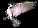 птица, bird, vogel, oiseau, pájaro, uccello, pássaro