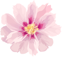 цветы, бежевый цветок, флористика, флора, flowers, beige flower, floristics, blumen, beige blumen, floristik, fleurs, fleur beige, floristique, flore, flor beige, fiori, fiore beige, floristica, flores, flor bege, florística, flora, квіти, бежевий квітка