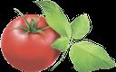 помидор, томаты, красный, tomato, red, rot, rouge, rojo, pomodoro, rosso, tomate, vermelho, помідор, томати, червоний