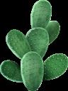 кактус, комнатное растение, зеленое растение, флора, houseplant, flowerpot, green plant, kaktus, zimmerpflanze, blumentopf, grünpflanze, plante d'intérieur, pot de fleur, plante verte, flore, planta de interior, maceta, cactus, pianta d'appartamento, vaso di fiori, pianta verde, cacto, planta de casa, vaso de plantas, planta verde, flora, кімнатна рослина, вазон, зелена рослина