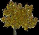 дерево, зеленое растение, желтая листва, осень, листопад, tree, green plant, yellow foliage, autumn, falling leaves, baum, grün, gelb pflanzenblätter, herbst blattfall, arbre, plante verte, feuillage jaune, feuille d'automne chute, árbol, follaje amarillo, caída de las hojas de otoño, albero, pianta verde, fogliame giallo, foglia d'autunno caduta, árvore, planta verde, folhagem amarela, queda da folha do outono, зелена рослина, жовте листя, осінь