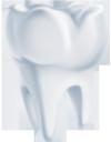 медицина, органы человека, анатомия, стоматология, части тела, тело человека, medicine, human organs, anatomy, tooth, dentistry, body parts, human body, medizin, menschliche organe, zahn, zahnheilkunde, körperteile, menschlicher körper, médecine, organes humains, anatomie, dent, dentisterie, parties du corps, corps humain, órganos humanos, anatomía, diente, odontología, partes del cuerpo, cuerpo humano, organi umani, odontoiatria, parti del corpo, corpo umano, medicina, órgãos humanos, anatomia, dente, odontologia, partes do corpo, corpo humano, органи людини, анатомія, зуб, стоматологія, частини тіла, тіло людини