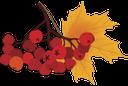 рябина, осенняя листва, осень, лист рябины, желтый лист, ветка рябины, ashberry, autumn foliage, autumn, ashberry leaf, yellow leaf, ashberry branch, herbstlaub, herbst, blatt esche, braunes blatt, zweig rowan, feuillage d'automne, l'automne, la cendre de feuilles, feuille brune, brindille sorbier, follaje de otoño, otoño, ceniza hoja, hoja marrón, ramita de rowan, fogliame autunnale, autunno, foglia di cenere, foglia marrone, ramoscello rowan, rowan, folha do outono, outono, cinzas folha, folha marrom, rowan galho, горобина, осіннє листя, осінь, лист горобини, жовтий лист, гілка горобини, красная рябина