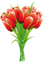 флора, букет цветов, тюльпан, цветы, весна, bouquet of flowers, tulips, flowers, spring, blumenstrauß, tulpen, blumen, frühling, flore, bouquet de fleurs, tulipes, fleurs, ressort, ramo de flores, tulipanes, mazzo di fiori, tulipani, fiori, flora, buquê de flores, tulipas, flores, primavera