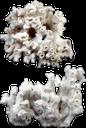 морской коралл, беспозвоночные, коралловый риф, sea coral, invertebrates, coral reef, marine korallen, wirbellose tiere, korallenriff, corail marin, les invertébrés, les récifs coralliens, corales, los arrecifes de coral marino, corallo marino, invertebrati, barriera corallina, coral marinho, invertebrados, recife de coral, морський корал, безхребетні, кораловий риф
