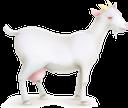 коза, домашние животные, парнокопытные, goat, pets, ziege, haustiere, chèvre, animaux de compagnie, artiodactyles, mascotas, artiodáctilos, capra, animali domestici, artiodattili, cabra, animais de estimação, artiodactyls, домашні тварини, парнокопитні