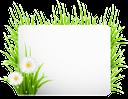 экология, зеленая трава, белая ромашка, чистый лист, l'écologie, l'herbe verte, marguerite blanche, feuille blanche, ecology, green grass, white daisy, blank sheet, ecología, hierba verde, margarita blanca, hoja en blanco, ökologie, grünes gras, weiße gänseblümchen, unbeschriebenes blatt, ecologia, grama, margarida branca, folha em branco