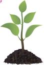 флора, росток, побег растения, молодое растение, зеленый листок, sprout, plant shoots, young plant, green leaf, sprießen, pflanzensprossen, junge pflanze, grünes blatt, flore, pousse, pousses de plantes, jeune plante, feuille verte, brote, brotes de plantas, la planta joven, la hoja verde, germoglio, germogli di piante, giovane pianta, foglia verde, flora, broto, planta tiros, jovem planta, folha verde