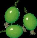 крыжовник, ягода крыжовника, зеленый, зеленая ягода, gooseberries, gooseberry berry, green, green berry, stachelbeeren, stachelbeere, grüne, grüne beere, groseilles à maquereau, groseille à maquereau, vert, baie verte, grosellas, grosella espinosa, bayas verdes, uva spina, bacche di uva spina, bacche verdi, groselhas, baga de groselha, verde, baga verde, агрус, ягода агрусу, зелений, зелена ягода