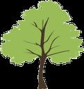 флора, лиственное дерево, зеленое растение, deciduous tree, green plant, laubbaum, grünpflanze, flore, arbre à feuilles caduques, plantes vertes, árbol de hoja caduca, las plantas verdes, albero a foglie decidue, pianta verde, flora, árvore de folha caduca, planta verde