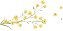 цветы, желтые цветы, flowers, yellow flowers, blumen, gelbe blüten, fleurs, fleurs jaunes, flores amarillas, fiori, fiori gialli, flores, flores amarelas, квіти, жовті квіти