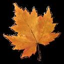 желтый кленовый лист, лист кленового дерева, осень, лист клена, канадский клен, канада, yellow maple leaf, maple tree leaf, autumn, maple leaf, canadian maple, canada, gelb ahornblatt, ahornblatt baum, herbst, ahornblatt, roter ahorn, kanada, feuille jaune d'érable, arbre de la feuille d'érable, automne, feuille d'érable, l'érable rouge, le canada, клен