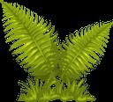 папоротник, лист папоротника, зеленое растение, зеленый лист, fern, fern leaf, green plant, green leaf, farn, farnblatt, grüne pflanze, grünes blatt, fougère, feuille de fougère, plante verte, feuille verte, helecho, hoja de helecho, hoja verde, felce, foglia di felce, pianta verde, foglia verde, samambaia, folha de samambaia, planta verde, folha verde, папороть, листя папороті, зелена рослина, зелений лист