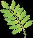 лист рябины, a sheet of mountain ash, лист горобини, зеленый лист, a green leaf, a leaf of a tree, rowan blatt, grünes blatt, baumblatt, feuille sorbier, feuille verte, feuille d'arbre, rowan hoja, hoja verde, hoja del árbol, rowan foglia, foglia verde, albero a foglia, rowan folha, folha verde, folha da árvore, зелений лист, лист дерева