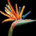 антуриум, цветок антуриума, тропические цветы, распустившийся цветок, зеленое растение, цветы, флор, anthurium flower, tropical flowers, blossoming flower, green plant, flowers, anthuriumblume, tropische blumen, blühende blume, grüne pflanze, blumen, geblasener blume, grüne pflanzen, fleur d'anthurium, fleurs tropicales, fleur épanouie, plante verte, fleurs, flore, flor de anthurium, flores tropicales, flor en flor, anthurium, anthurium fiore, fiori tropicali, fiore che sboccia, pianta verde, fiori, antúrio, flor de antúrio, flores tropicais, flor desabrochando, planta verde, flores, flora, антуріум, квітка антуріум, тропічні квіти, розквітла квітка, зелена рослина, квіти