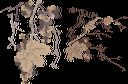 виноград, гроздь винограда, виноделие, зеленый лист, ягода, виноградная ягода, виноградная лоза, grapes, bunch of grapes, winemaking, green leaf, berry, grape berry, grapevine, trauben, weintraube, weinbereitung, grünes blatt, beere, traubenbeere, weinrebe, raisins, grappe de raisin, vinification, feuille verte, baie, raisin berry, vigne, racimo de uvas, enología, hoja verde, baya, vid, grappolo d'uva, vinificazione, foglia verde, bacca, uva a bacca, vite, uvas, cacho de uvas, vinificação, folha verde, baga, uva, videira, гроно винограду, виноробство, зелений лист, виноградна ягода, виноградна лоза