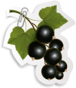 смородина, ягода, скрепка, этикетка, currant, berry, label, johannisbeere, beere, klammer, etikett, cassis, baie, étiquette, grosella, baya, ribes, bacche, clip, etichetta, groselha, baga, clipe, etiqueta, скріпка, етикетка