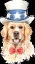 собака, золотистый ретривер, домашние животные, фауна, dog, pets, hund, haustiere, chien, animaux domestiques, faune, perro, mascotas, cane, golden retriever, animali domestici, cachorro, retriever dourado, animais estimação, fauna, пес, золотистий ретрівер, домашні тварини