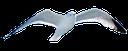 чайка, чайка в полете, gull, gull in flight, möwe, möwe im flug, mouette, mouette en vol, gaviota, gaviota en vuelo, gabbiano, gabbiano in volo, gaivota, gaivota em vôo