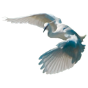 белая цапля, болотная птица, white heron, wading bird, weißer reiher, waten vogel, héron blanc, échassier, garza blanca, especie de ave, airone bianco, trampoliere, garça branca, ave pernalta