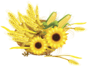 кукуруза, подсолнух, колоски пшеницы, осень, corn, sunflower, wheat sprouts, cereals, autumn, sonnenblumen, weizen ohren, korb, getreide, herbst, maïs, tournesol, épis de blé, panier, céréales, automne, maíz, girasol, trigo oídos, cesta, los cereales, el otoño, mais, girasole, spighe di grano, basket, cereali, autunno, milho, girassol, espigas de trigo, cesto, cereais, outono, кукурудза, соняшник, колоски пшениці, корзина, злаки, осінь