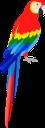 попугай, птица попугай, разноцветный попугай, тропические птицы, отряд пернатых, пернатые, птицы, parrot, bird parrot, colorful parrot, tropical birds, feathered squad, feathered, birds, papagei, vogelpapagei, bunter papagei, tropische vögel, gefiederte truppe, gefiederte, vögel, perroquet, perroquet oiseau, perroquet coloré, oiseaux tropicaux, escouade à plumes, à plumes, oiseaux, loro, loro pájaro, loro colorido, pájaros tropicales, escuadrón emplumado, pájaros, pappagallo, pappagallo uccello, pappagallo colorato, uccelli tropicali, squadra piumata, piumata, uccelli, papagaio, papagaio de pássaro, papagaio colorido, pássaros tropicais, esquadrão de penas, emplumado, pássaros, папуга, птах папуга, різнобарвний папуга, тропічні птахи, загін пернатих, пернаті, птиці