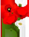 красный мак, ромашка, полевые цветы, букет цветов, зеленое растение, красные маки, флора, цветы, red poppy, chamomile, wildflowers, bouquet of flowers, green plant, red poppies, flowers, rote mohnblume, kamille, wildblumen, blumenstrauß, grüne pflanze, rote mohnblumen, blumen, pavot rouge, camomille, fleurs sauvages, bouquet de fleurs, plante verte, coquelicots rouges, flore, fleurs, amapola roja, manzanilla, ramo de flores, amapolas rojas, papavero rosso, camomilla, fiori di campo, bouquet di fiori, pianta verde, papaveri rossi, fiori, papoila vermelha, camomila, flores silvestres, buquê de flores, planta verde, papoilas vermelhas, flora, flores, червоний мак, польові квіти, букет квітів, зелена рослина, червоні маки, квіти