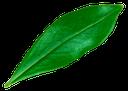 зеленое растение, green plant, grüne pflanze, plante verte, las plantas verdes, pianta verde, planta verde, зеленый лист, лист дерева, green leaf, tree leaves, grünes blatt, baumblätter, feuille verte, les feuilles des arbres, hoja verde, las hojas de los árboles, foglia verde, le foglie degli alberi, folha verde, folhas de árvore