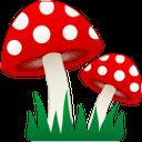 гриб, мухомор, лесной гриб, красный гриб, грибы, mushroom, fly agaric, forest mushroom, red mushroom, mushrooms, pilz, fliegenpilz, waldpilz, roter pilz, pilze, champignon, agaric mouche, champignon de la forêt, champignon rouge, champignons, seta, agárico de mosca, seta de bosque, seta roja, setas, mosca agarico, funghi foresta, funghi rossi, funghi, cogumelo, agaric mosca, cogumelo florestal, cogumelo vermelho, cogumelos, лісовий гриб, червоний гриб, гриби