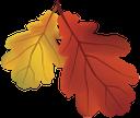 красный лист, осенняя листва, осень, желтый лист, red leaf, autumn foliage, autumn, oak leaf, yellow leaf, rotes blatt, herbstlaub, herbst, eichenblatt, gelbes blatt, feuille rouge, feuillage d'automne, automne, feuille de chêne, feuille jaune, de hoja roja, follaje de otoño, otoño, hoja de roble, hoja amarilla, foglia rossa, fogliame autunnale, autunno, foglia di quercia, foglia gialla, folha vermelha, folhagem de outono, outono, folha do carvalho, folha amarela, червоний лист, осіннє листя, осінь, лист дуба, жовтий лист
