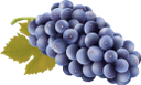 виноград, синий виноград, гроздь винограда, осень, ягоды винограда, виноделие, ягоды, grapes, blue grapes, bunch of grapes, autumn, grape berries, winemaking, berries, trauben, blaue trauben, weintraube, herbst, traubenbeeren, weinherstellung, beeren, raisins, raisins bleus, grappe de raisin, automne, baies de raisin, vinification, baies, uvas azules, racimo de uvas, otoño, bayas de uva, vinificación, bayas, uva, uva blu, grappolo d'uva, autunno, acini d'uva, vinificazione, frutti di bosco, uvas, uvas azuis, cacho de uvas, outono, bagas de uva, vinificação, bagas, синій виноград, гроно винограду, осінь, ягоди винограду, виноробство, ягоди