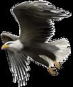 фауна, птицы, белоголовый орел, символ америки, сша, bird, bald eagle, the symbol of america, vogel, weißkopfseeadler, das symbol von amerika, faune, oiseau, aigle chauve, le symbole de l'amérique, usa, pájaro, águila calva, el símbolo de américa, ee.uu., uccello, aquila calva, il simbolo d'america, stati uniti d'america, fauna, pássaro, águia americana, o símbolo de américa, eua