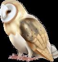 сова, филин, птицы, ночная птица, owl, eagle owl, birds, night bird, eule, uhu, vögel, nachtvogel, hibou, aigle hibou, oiseaux, oiseau de nuit, búho, búho real, pájaros, pájaro nocturno, gufo, gufo reale, uccelli, uccello notturno, coruja, coruja de águia, pássaros, pássaro noturno, пугач, птиці, нічний птах, загін пернатих