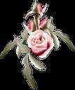 роза, цветок розы, красная роза, бутон розы, цветы, флора, rose flower, red rose, rose bud, flowers, rosenblüte, rote rose, rosenknospe, blumen, rose, fleur rose, rose rouge, bouton rose, fleurs, flore, rosa roja, capullo de rosa, fiore rosa, rosa rossa, bocciolo di rosa, fiori, rosa, flor rosa, rosa vermelha, botão de rosa, flores, flora, троянда, квітка троянди, червона троянда, бутон троянди, квіти