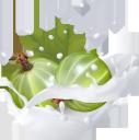 фрукты в молоке, фруктовый йогурт, брызги молока, крыжовник, fruit in milk, fruit yogurt, spray of milk, gooseberries, früchte in milch, fruchtjoghurt, milchspray, stachelbeeren, fruits au lait, yaourt aux fruits, spray de lait, groseilles à maquereau, fruta en leche, yogurt de fruta, spray de leche, grosellas, frutta nel latte, yogurt alla frutta, spruzzi di latte, uva spina, фрукти в молоці, фруктовий йогурт, бризки молока, агрус