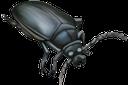 фауна, насекомые, жук скарабей, insects, beetle scarab, insekten, käfer skarabäus, faune, insectes, coléoptère scarabée, insectos, escarabajo del escarabajo, insetti, scarabeo, fauna, insetos, besouro do escaravelho