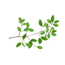 ветка дерева, зеленый лист, branch of a tree, green leaf, baumzweig, grünes blatt, rama de un árbol, hoja verde, ramo di un albero, foglia verde, galho de árvore, folha verde