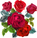 роза, цветок розы, красная роза, бутон розы, цветы, красный цветок, флористика, красный, зеленое растение, флора, rose flower, red rose, rosebud, flowers, floristry, red flower, red, green plant, rosenblume, rot, rosenblüte, rote rose, rosenknospe, blumen, floristik, rote blume, rote, grüne pflanze, rose, fleur rose, rose rouge, bouton de rose, fleurs, fleuriste, fleur rouge, rouge, plante verte, flore, rosa roja, capullo de rosa, floristería, flor roja, rojo, fiore di rosa, rosa rossa, bocciolo di rosa, fiori, floristica, fiore rosso, rosso, pianta verde, rosa, flor rosa, rosa vermelha, botão de rosa, flores, floricultura, flor vermelha, vermelha, planta verde, flora, троянда, квітка троянди, червона троянда, бутон троянди, квіти, червона квітка, червоний, зелена рослина