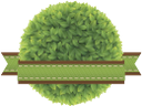 зеленый лист, лента, зеленое растение, green leaf, ribbon, green plant, rohschicht, streifen-, natur, grün pflanze, feuille verte, bande, nature, plante verte, hojas, tiras, naturaleza, fogli, nastri, natura, pianta verde verde, folha, tira, natureza, planta verde verde, зелений лист, стрічка, природа, зелена рослина