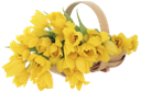 цветы, корзина с цветами, желтые тюльпаны, весна, восьмое марта, букет цветов, тюльпан, flowers, a basket with flowers, yellow tulips, spring, the eighth of march, a bouquet of flowers, a tulip, blumen, ein korb mit blumen, gelbe tulpen, frühling, der achte märz, ein blumenstrauß, eine tulpe, fleurs, un panier de fleurs, tulipes jaunes, printemps, le huit mars, un bouquet de fleurs, une tulipe, una canasta con flores, tulipanes amarillos, el 8 de marzo, un ramo de flores, un tulipán, fiori, un cesto con fiori, tulipani gialli, l'8 marzo, un mazzo di fiori, un tulipano, flores, uma cesta com flores, tulipas amarelas, primavera, o oitavo de março, um buquê de flores, uma tulipa, квіти, корзина з квітами, жовті тюльпани, восьме березня, букет квітів